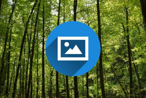 Image icon over green tall forest image